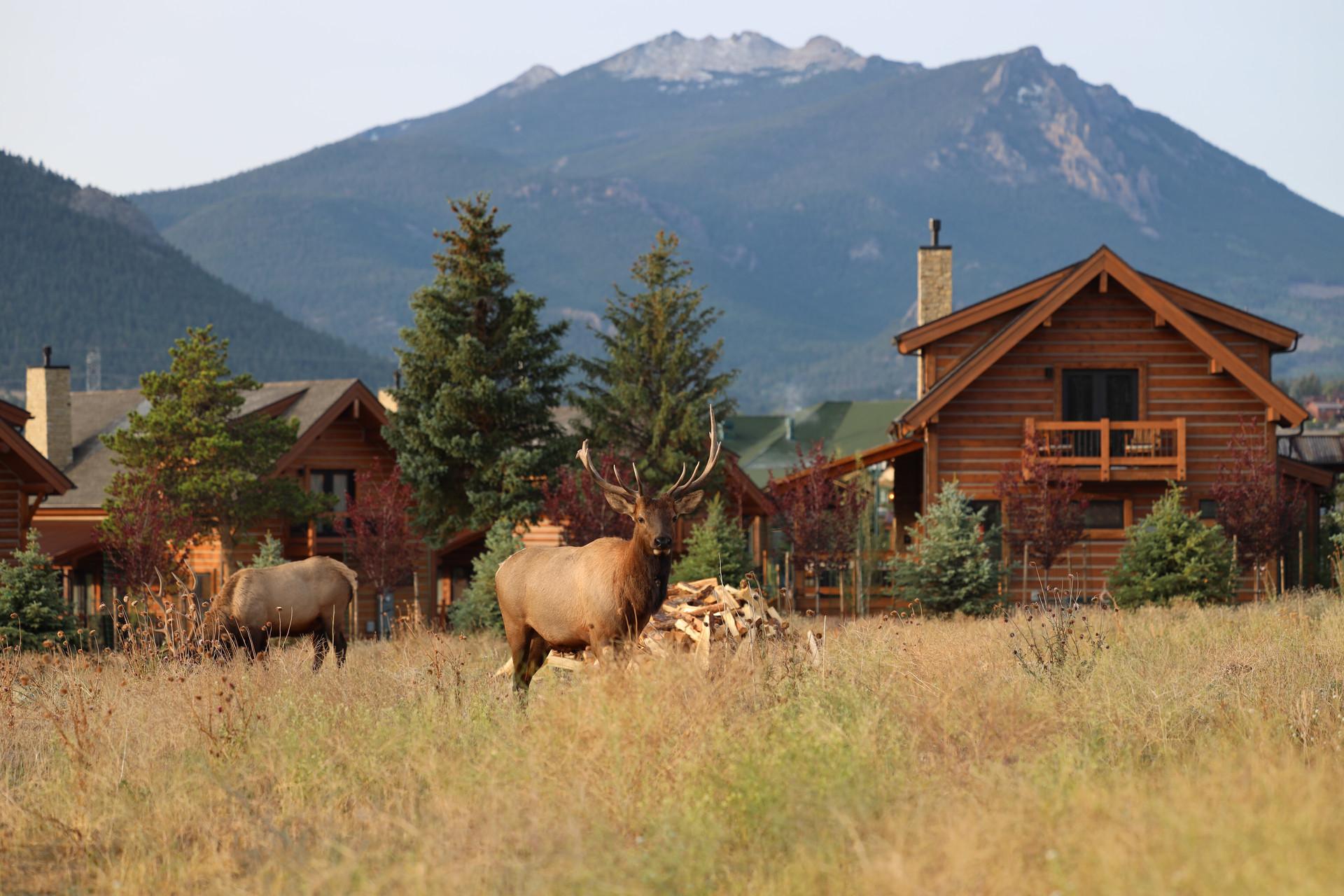 Mountain Village Cabins