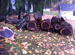 Black Walnut Timber Harvest Nov 2014