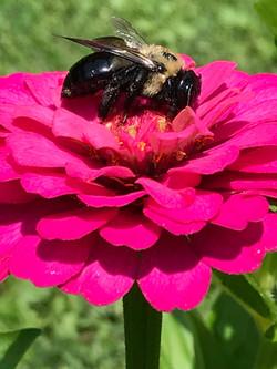 Visiting Pollinator