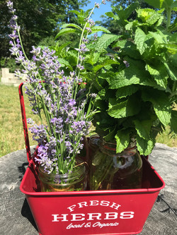 Mint and Lavender for Sale