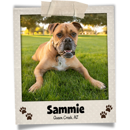 Poodini's Pet of the Month: Sammie!