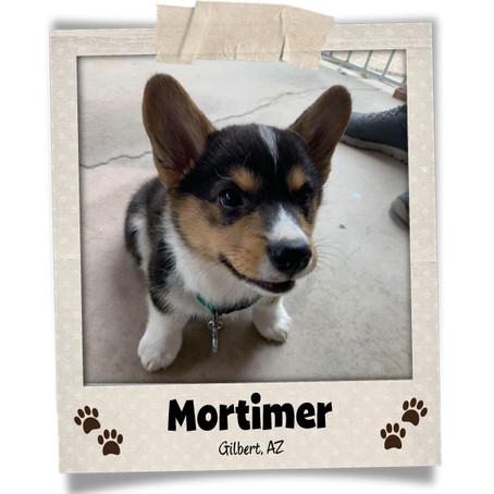 Poodini's Pet of the Month: Mortimer!