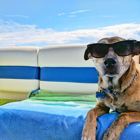 Dog Safety Tips for Summer Heat