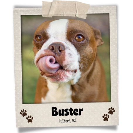 Poodini's Pet of the Month: Buster!