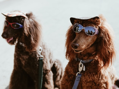 Hot Under The Collar: A Summer Guide To Pet Protection