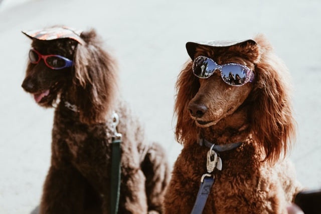 Summer Pet Protection