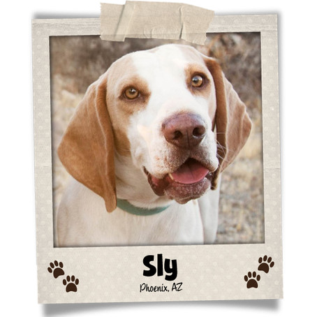 Poodini's Pet of the Month: Sly!