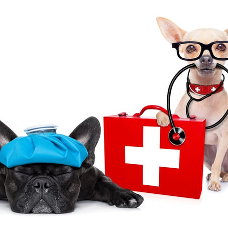 The Perfect First Aid Kit for Dogs!