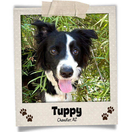 Poodini's Pet of the Month: Tuppy!