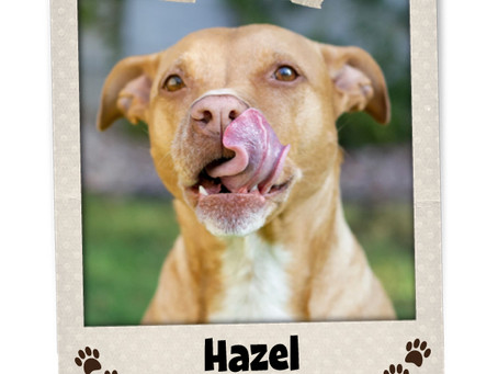 Poodini's Pet of the Month: Hazel!