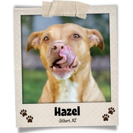 Poodini's Pet of the Month: Hazel!