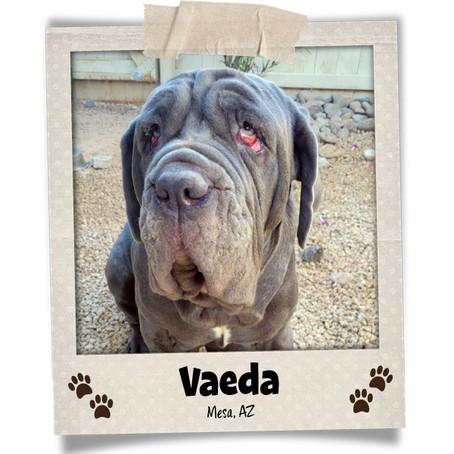 Poodini's Pet of the Month: Vaeda!