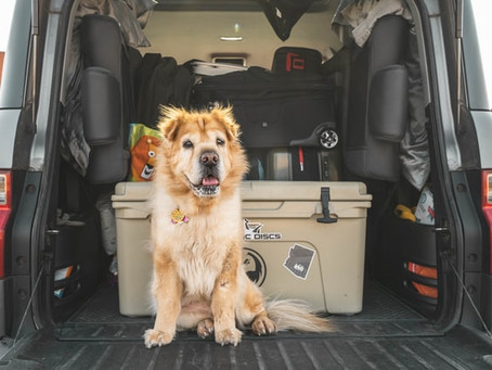 How You Can Travel with Your Pet Painlessly and Cost-Effectively