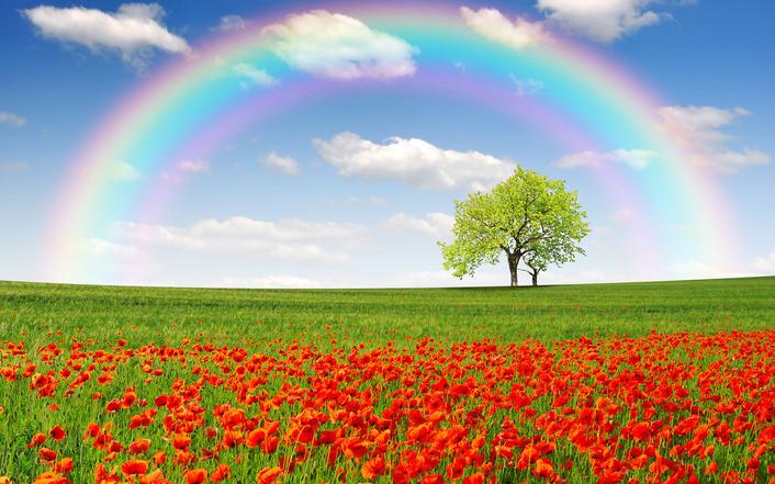 rainbow-on-a-poppy-field-1434-706.jpg