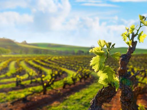 Sostenibilità in vitivinicoltura