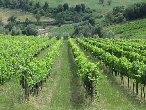 VITE Problemi fitosanitari e strategie di difesa