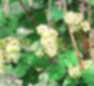 grappoli.jpg