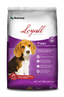 Loyall Puppy