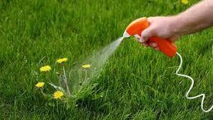 herbicides image.jfif