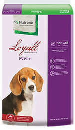 loyall%20puppy_edited.png