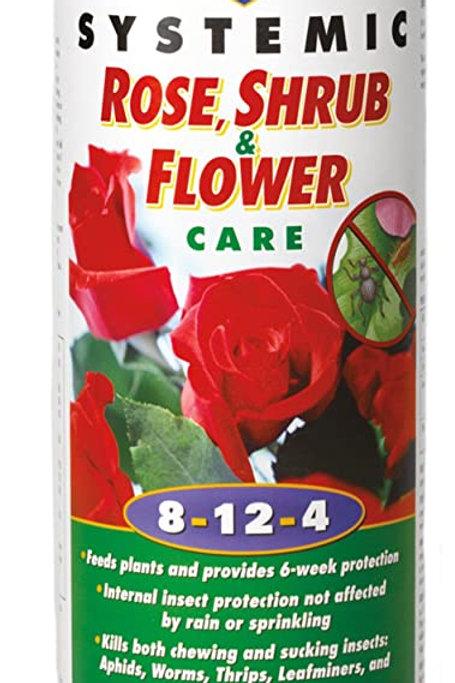 Lilly Miller Rose, Shrub & Flower Care