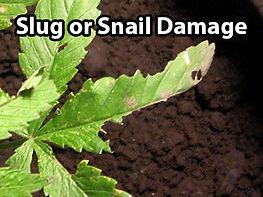 slug and snail.jpg