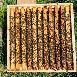 Italian Comlete One Box Hive