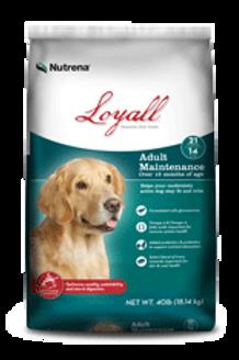 Loyall Adult Maintenance