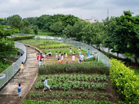 Làm vườn trên sân thượng: Trường mẫu giáo nông dân