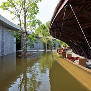 Bamboo Wing