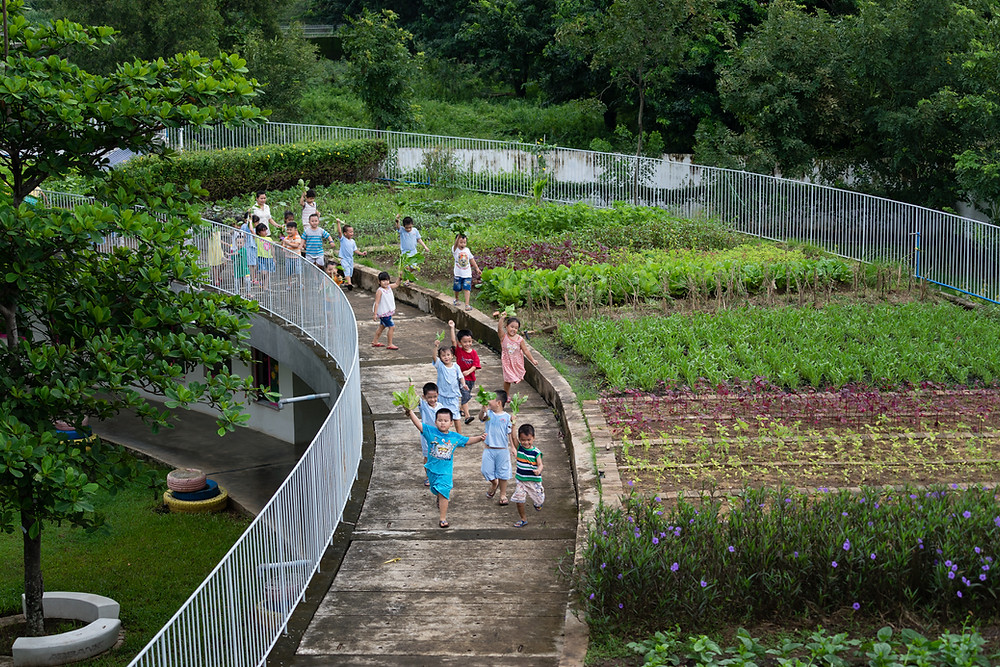 Rooftop Gardening | The Farming Kindergarten