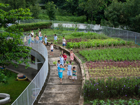Gardening on the Rooftop: The Farming Kindergarten