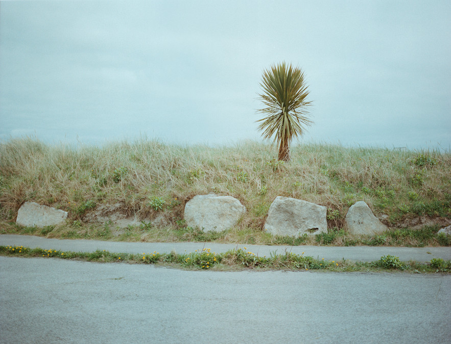 A lone palm tree at Dublin port.