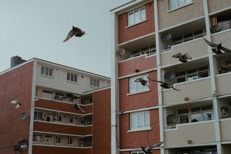 Pigeons fly over flats, central Dublin.