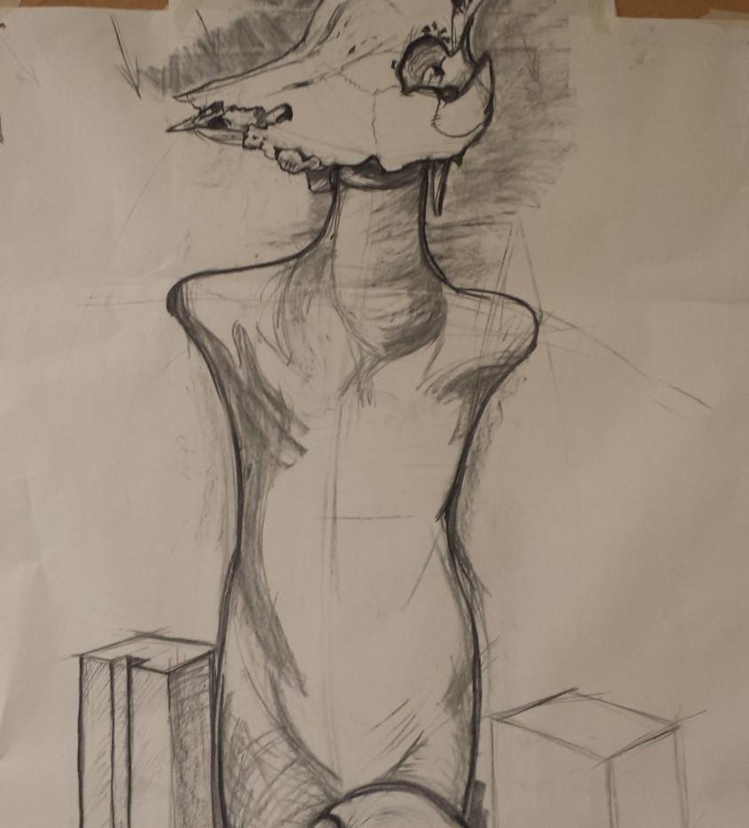 Still life study, cow skull