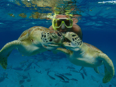 turtle kiss ...Taken by Charles from Cliff Sharker