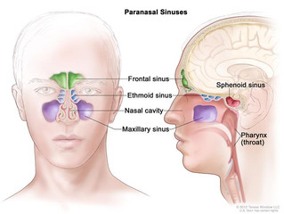 "The Nose Knows: ""Blow"" your Sinus Problems Away!"
