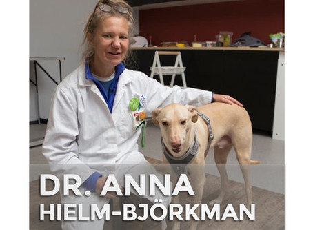 DR. ANNA HIELM-BJÖRKMAN | Feeding Your Dog Fresh Foods May Ward Off Allergies