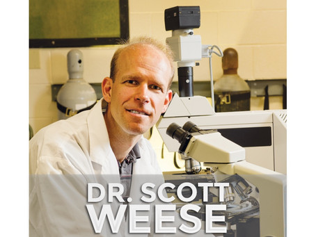DR. SCOTT WEESE | New Study Shows Cats Can Get Coronavirus - Don't Worry!