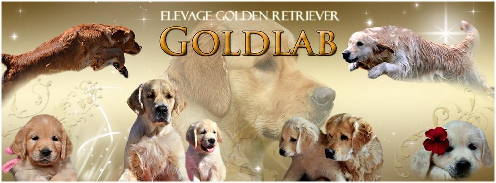 Elevage Goldlab