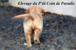 Du P'tit Coin de Paradis