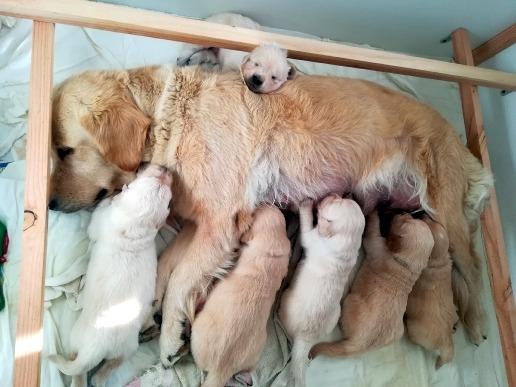 Les bébés ont quelques jours