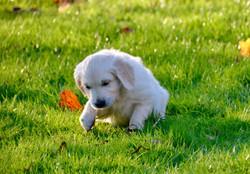 Je saute dans l'herbe