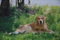 Ramsès - 2 ans