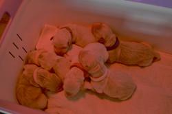 Bébés Isara naissance - 1
