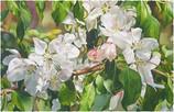 Mary Margaret Pipkin's Flowering Watercolors