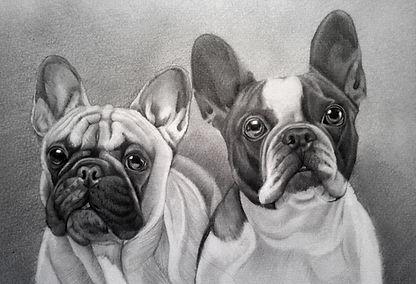 Bulldogs Sketch