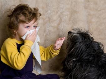 Espacios que abren sus puertas a las mascotas, ¿y los alérgicos?