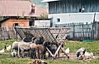 reolink go pt-Farm _ Ranch-m.jpg