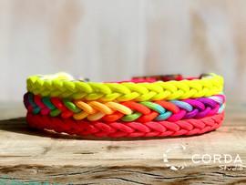 coleira colorida.jpg
